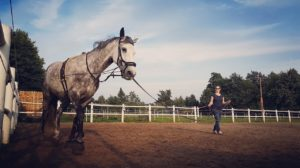 stelle pony zur verfügung